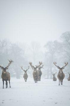 Maitres de l'hiver