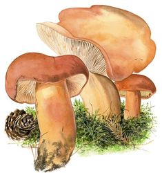 Vielä ehdit metsään: Näin löydät sienet Stuffed Mushrooms, Vegetables, Food, Stuff Mushrooms, Essen, Vegetable Recipes, Meals, Yemek, Veggies