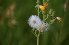 Photo S, Dandelion, Seeds, Outdoors, This Or That Questions, Nature, Flowers, Pictures, Photography