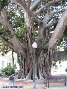 "Amazing tree in Alicante Spain,,,,,,,,**+Wow it looks like it belongs in an ""enchanted wood""!"