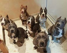 See more at https://mypupboutique.com/collections/pit-bull                                                                                                                                                                                 More #pitbull
