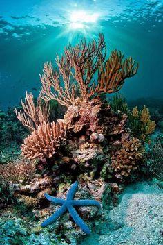 Mini Book: Coral