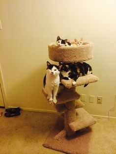 Safe to say the cats love the new cat tower.