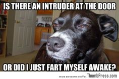 Is there an intruder at the door...?