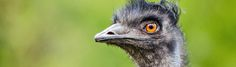 Why having a 'bird brain' is actually awesome