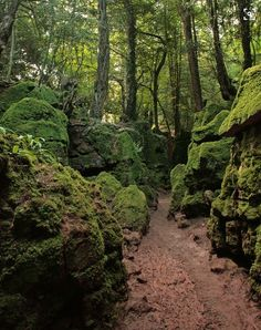 Puzzlewood, Forest of Dean, Herefordshire