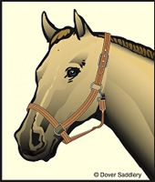 How to Fit a Halter  www.goldenrabbitsaddlery.com