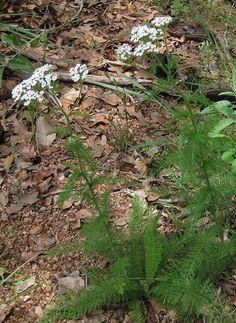 Foraging Texas   http://www.foragingtexas.com/