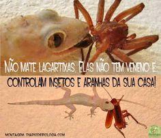 """""""O GRITO DO BICHO"""": Não mate lagartixas..."""