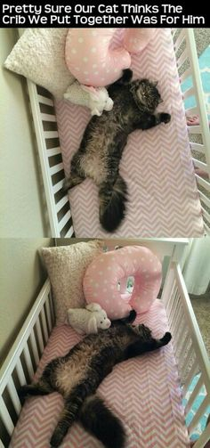 Pretty sure the cat thought the crib was for him...