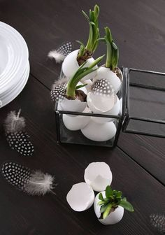 Unusual ideas for Easter for a modern decoration in Nordic .- Ausgefallene Ideen zu Ostern für eine moderne Deko in Nordic Style modern easter decoration with white eggs, daffodils in eggshells and feathers in a glass box with black metal frames - Spring Decoration, Wallpaper Harry Potter, Decoration Plante, Style Deco, Deco Floral, Inside Design, Glass Boxes, Egg Shells, Nordic Style