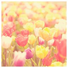 Spring tulip color photo print  whimsical fine por oohprettyshiny.