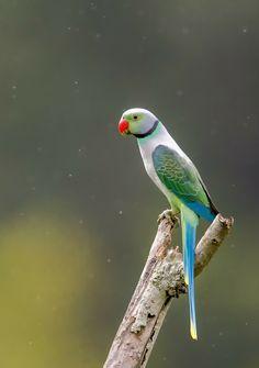 Green Parrot Bird, Parrot Pet, Pretty Birds, Beautiful Birds, Animals Beautiful, Tropical Birds, Colorful Birds, N Animals, Cute Animals