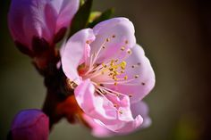 500px / Pretty In Pink by Frank Vacante