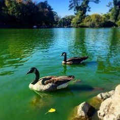 Take a rowboat or paddleboat for a spin around Stow Lake in Golden Gate Park. | 17 Things To Do In San Francisco If You're In A Rut