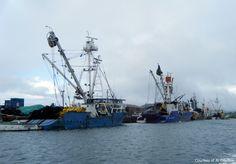 pohnpei harbor tuna seiners