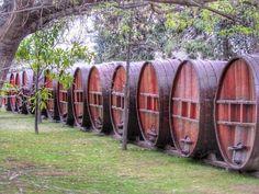 Quem gosta de vinho aí levanta a mão!   Em Santiago do Chile visitamos a vinícola @conchaytoro e vimos as videiras conhecemos um pouco da história do local e as adegas. O lugar é lindo e adoramos o vinho porém achei a visita um pouco rápida demais. Vocês já visitaram a vinícola? O que acharam? #comospesnomundo #comospesnochile #Chile #Santiago #ConchayToro #americalatina #americadosul #sulamerica #viajar #viagem #travelgram #traveblogger #tripgram #instatrip #traveligers #winelovers #wine…