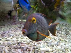 fishy! at the new england aquarium tehe
