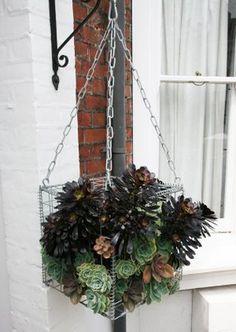 Hanging gabion full of succulents.