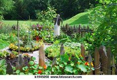 Vegtables fresh from the garden