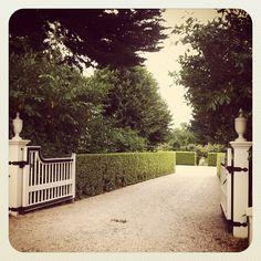 hedge / pea gravel drive #gardendesign
