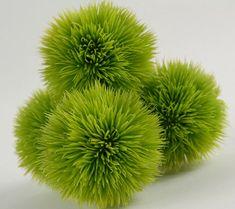 "Decor for wedding table!!  Green Allium Lucy 2-1/2"" Green Grass Balls (4 balls/ pkg) $3.99 pkg/ 2 pkgs for $3 each"