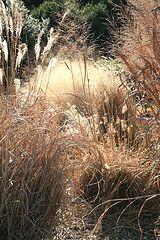 Best Perennial Ornamental Grasses