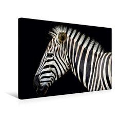 Zebraporträt - CALVENDO