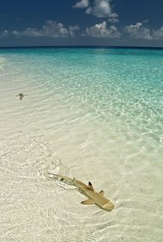0rient-express:  Fihalhohi Island   byPatrick Jaussi.
