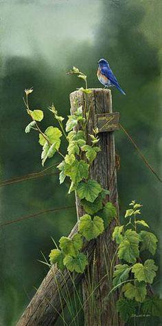 "Vine Sentinal - BluebirdSize: 21""x10"" -Susan Bourdet Fine Art"