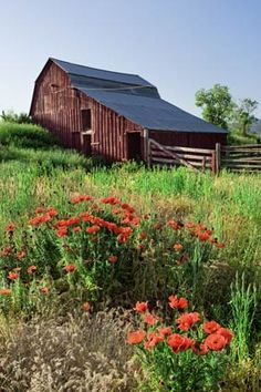 """Eastern Idaho ~ days bring wildflowers and tall grasses. Homesteaders along the Oregon Trail began settling productive farmlands and building barns like this one in the northern Rockies in droves around 1843, pursuing the romance, abundance, and a better life """"out West""""."""