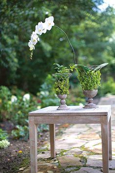 Open Air Moss Vase