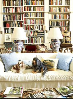 Warm and Cozy Home Libraries – Blue and White Home