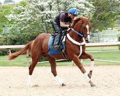 Bold Conquest looking gorgeous while prepping for the Arkansas Derby