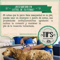 Si tu perro tiene piel seca y demasiada comezón, en Tu Casa Express tenemos algunos consejos para ayudarte.