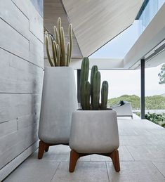 lifestyle, Indigenus Terra Planter with Base Large Potted Plants, Indoor Plants, Self Watering Plants, Concrete Color, Glass Molds, African Design, Outdoor Spaces, Garden Design, Cactus
