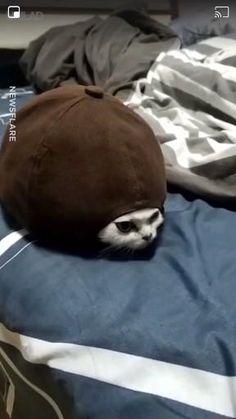 Cute Animal Memes, Funny Animal Videos, Cute Funny Animals, Funny Animal Pictures, Cute Baby Animals, Funny Cute, Animals And Pets, Cute Cats, Funny Videos