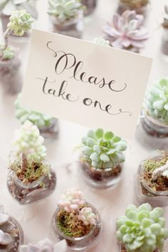 you could do the tiny succulents as placecards/favors. two birds, one stone etc.