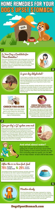 INFOGRAPHIC about home remedies for dogs with an upset stomach. Keep it handy, just in case! Skip the gum test if you are concerned your dog will bite you and see your vet to find the underlying cause of your dog's tummy troubles.