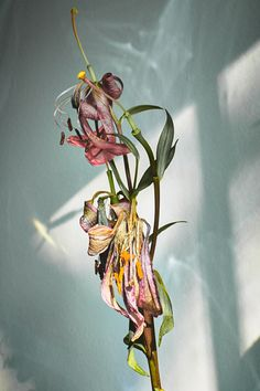 blueknees: arianna lago The poetry of material things Foto Still, Eleven Paris, Still Life Photography, Botanical Art, Belle Photo, Dried Flowers, Flower Art, Flower Poetry, Planting Flowers