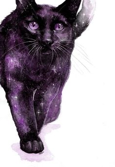 Pounce, from Tamora Pierce's Tortall universe - I love this!!!! #theconstellationcat
