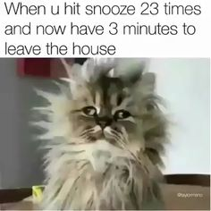 When u hit snooze 23 times and now have 8 minutes to leave the house - iFunny :) Cute Animal Memes, Funny Animal Quotes, Animal Jokes, Funny Animal Videos, Cute Funny Animals, Funny Animal Pictures, Funny Cute, Hilarious, Best Funny Videos