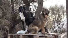 Urgent Help Needed for Dogs in Dubrovnik!   #world #share #help #animals #dogs #animalshelter #croatia #dubrovnik #animalabuse #killing #leonardodicaprio #robinhoodmovie #movie #movies