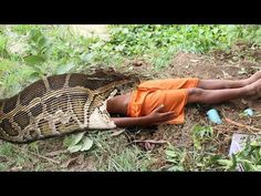 Awesome Snake Trap Using Fruit Plastic Foam Catch Many Snakes By Smart Boys ( Part 2 ) - YouTube