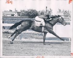 Ponder - Ponder had the same trainer and owner as 1948 Triple Crown winner Citation, winning the Derby in Calumet Farm, Horse Racing, Race Horses, Derby Horse, Derby Winners, Sport Of Kings, Thoroughbred Horse, Courses, Kentucky Derby