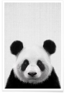 Print 61 – Lila x Lola – Premium Poster - City of animals Niedlicher Panda, Panda Love, Cute Panda, Cute Baby Animals, Animals And Pets, Panda Mignon, Animals Black And White, Black White, Panda Wallpapers