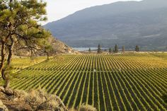 Burrowing Owl Estate Winery Guest House - Okanagan Valley, British Columbia, Canada