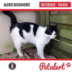 02.05.2017 / Chat / Lille / Nord / France