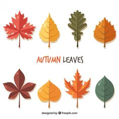 beautiful-autumn-leaves-in-flat-style_23-2147564722.jpg (626×626)