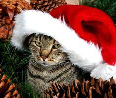 Christmas Animals Postcards for Xmas and Holidays,  Animals -  Cats - Animals - Postcards -  animals, postcard, ecard, xmas, christmas, holidays, free, clipart,